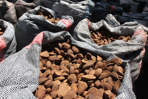 Peru produced 37 million metric tons of Brazil nuts between 2000 and 2010. Photo by Barbara Fraser.