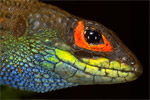 The biggest new species discoveries in 2014 (photos)