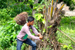 Child labor and palm oil in Indonesia