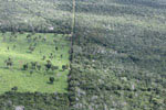 Plant wars: some tree species compete better against grasses for reforestation