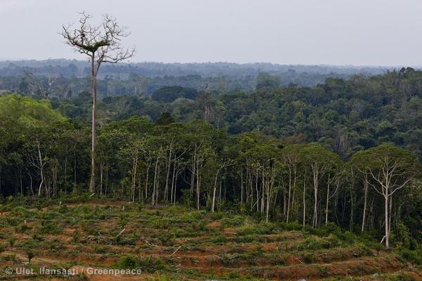 Palm Oil Documentation in Central Kalimantan