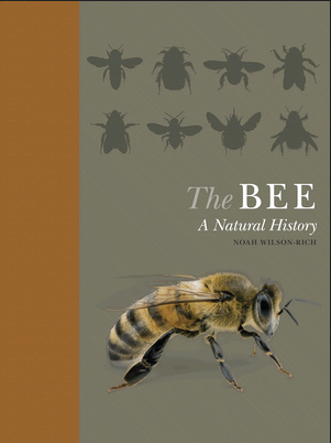 The Bee: A Natural History – book review
