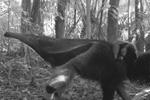 Top 10 camera trap photos of animals