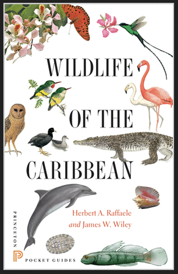 Wildlife of the Caribbean– book review