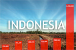 Half of Indonesia's deforestation occurs outside concession areas