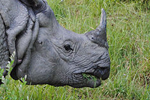 Authorities catch kingpin responsible for killing 20 rhinos