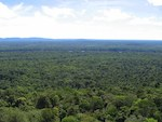 Assessing carbon stock value of forests is tricky business, study finds