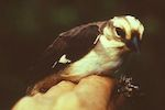 Critically endangered bird gets new addition to its reserve