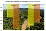 Rainforest loss increased in the 2000s, concludes new analysis