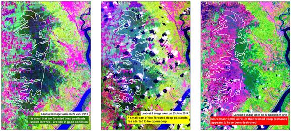 Hutan Borneo Lenyap di Konsesi Belum Tergarap, Siapa Bertanggungjawab?