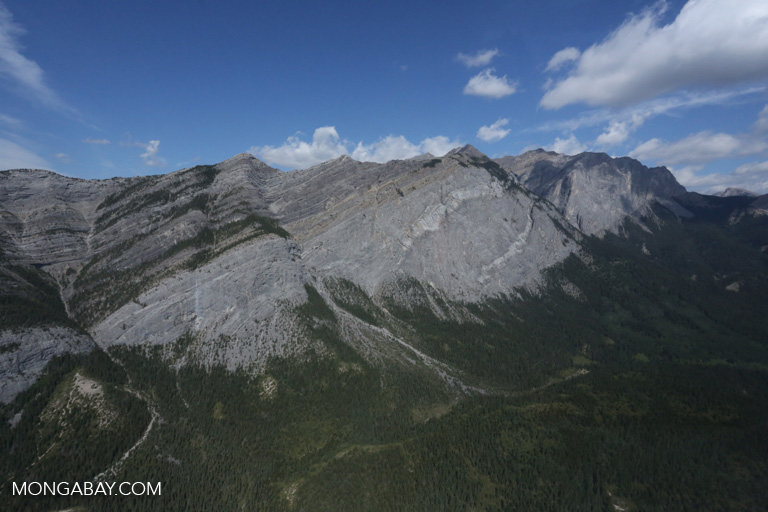 Aerial view of forest near Banff