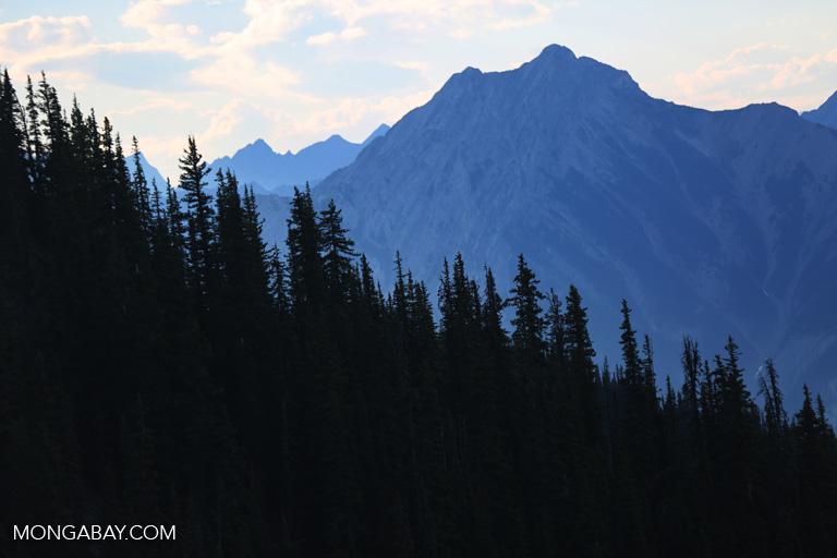 Bow Lake in Canada. Photo by Rhett A. Butler