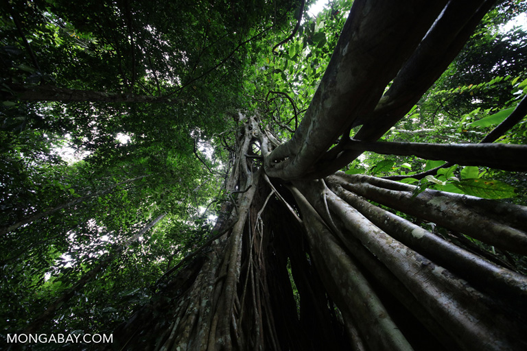 Photos from China's tropical rainforest