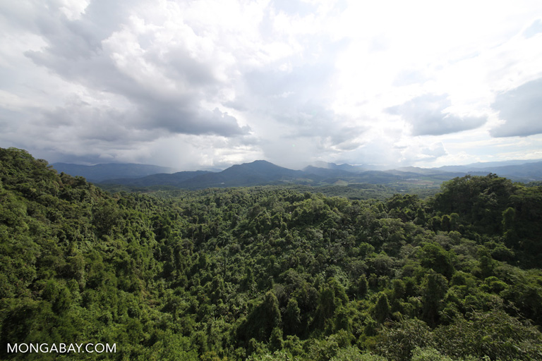 Rainforest reserve in the Xishuangbanna Tropical Botanical Garden