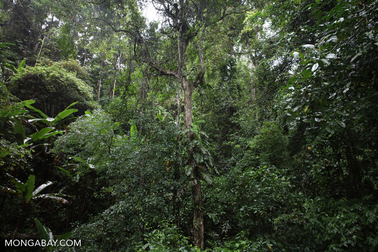 Canopy crane at Xishuangbanna Tropical Rainforest Ecosystem Station