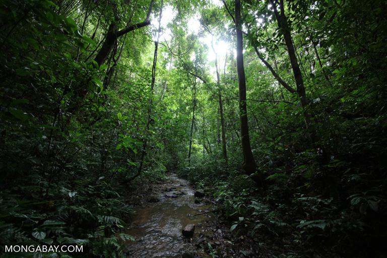 Rainforest creek in China