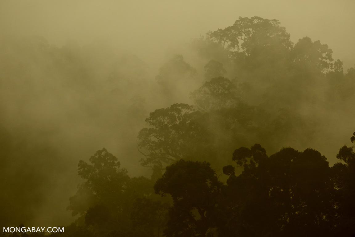 Misty rainforest in Sumatra (photo)
