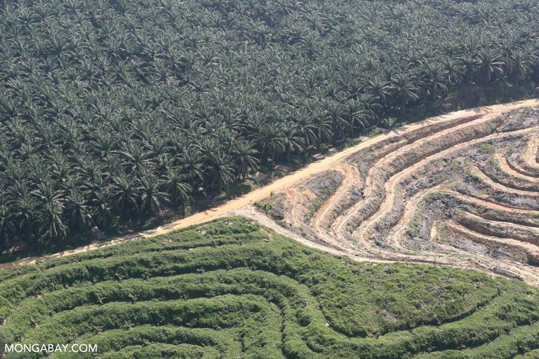 Perusahaan sawit yang banyak menyisakan cerita sedih terhadap masyarakat yang berada di sekitarnya. Foto: Rhett Butler