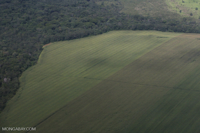 Soy field abutting against tropical forest