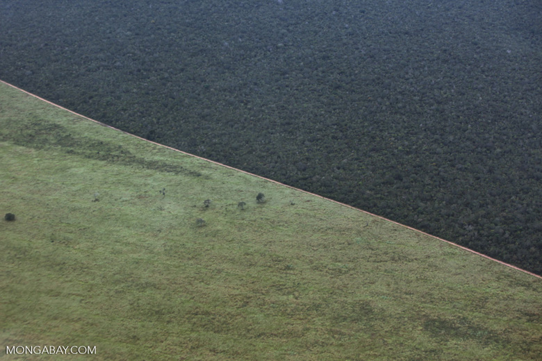 Cerrado and pasture