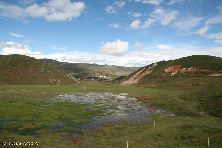 Flooded grassland in Yunnan