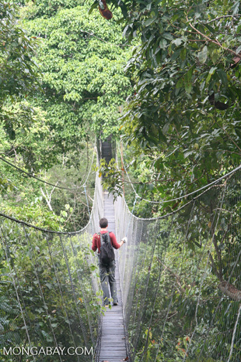 Rainforest canopy walkway in Colombia