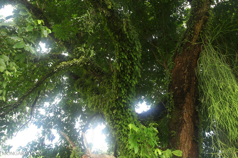 Epiphytes and ferns in a tree