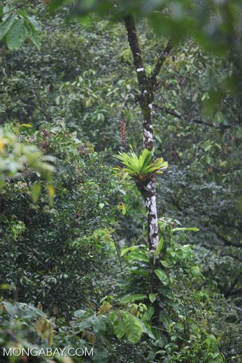 Bromeliad [costa-rica_0406]