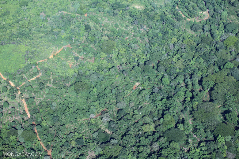 Aerial view of shade-grown coffee in Costa Rica