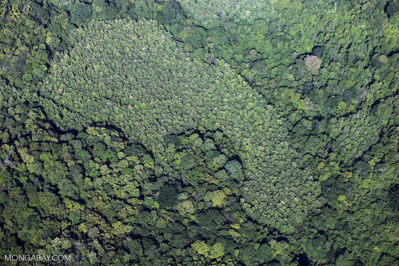 Overhead view of rain forest in Costa Rica