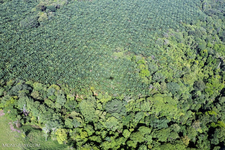 Aerial view of rainforest and oil palm plantations in Costa Rica [costa_rica_aerial_0149]