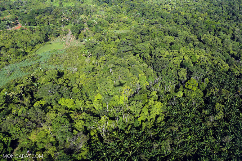 Aerial view of rainforest and oil palm plantations in Costa Rica [costa_rica_aerial_0169]