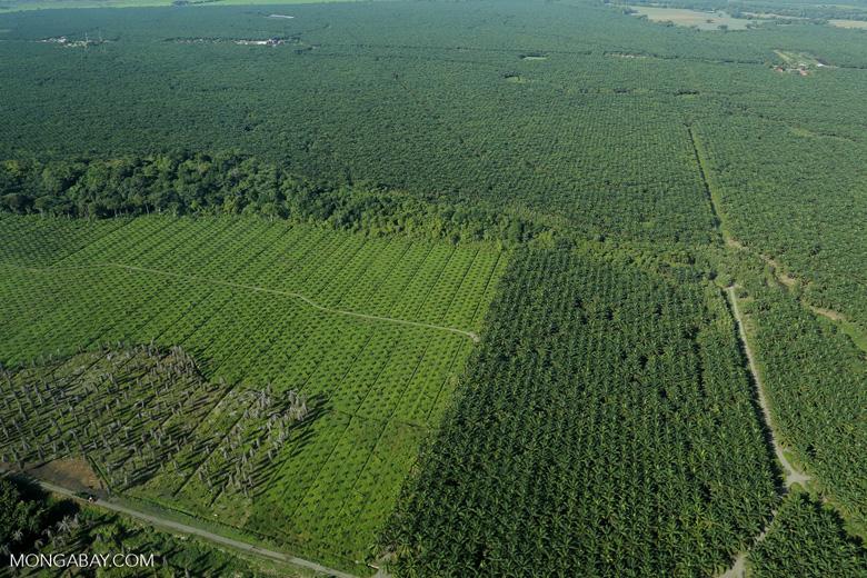 Oil palm plantation in Costa Rica [costa_rica_aerial_0204]
