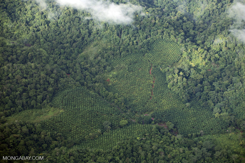 Oil palm plantation and rainforest in Costa Rica