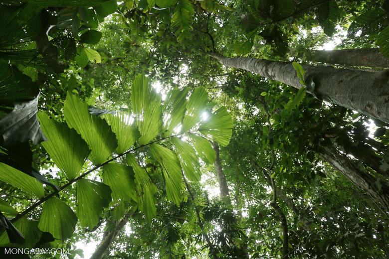 Costa Rica rainforest