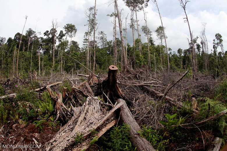 clear forest cause extinction of wildlife Some 36 football fields of forests are hacked, burned, and destroyed every  minute with each forest clearing, we lose about 135 species of.