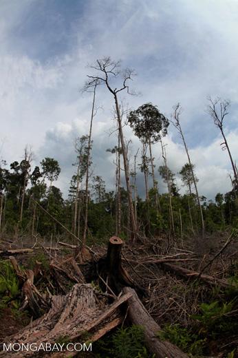 Devastated rainforest landscape in Borneo [kalbar_1121]