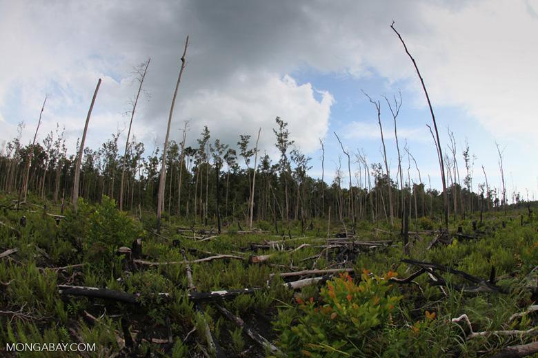 Devastated rain forest landscape in Borneo [kalbar_1157]