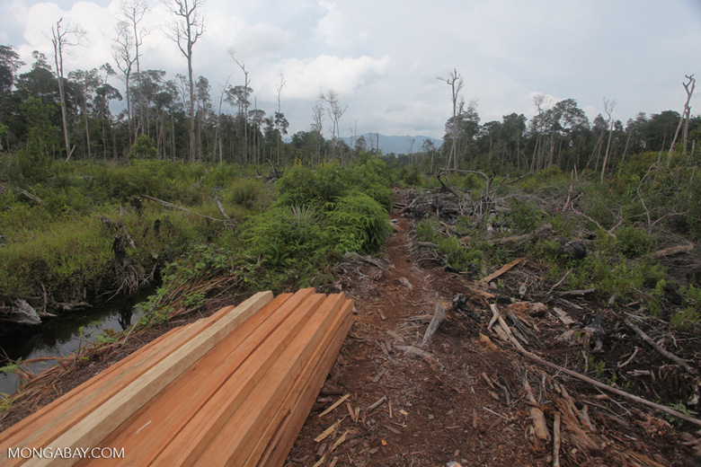 Illegally logged wood [kalbar_2216]