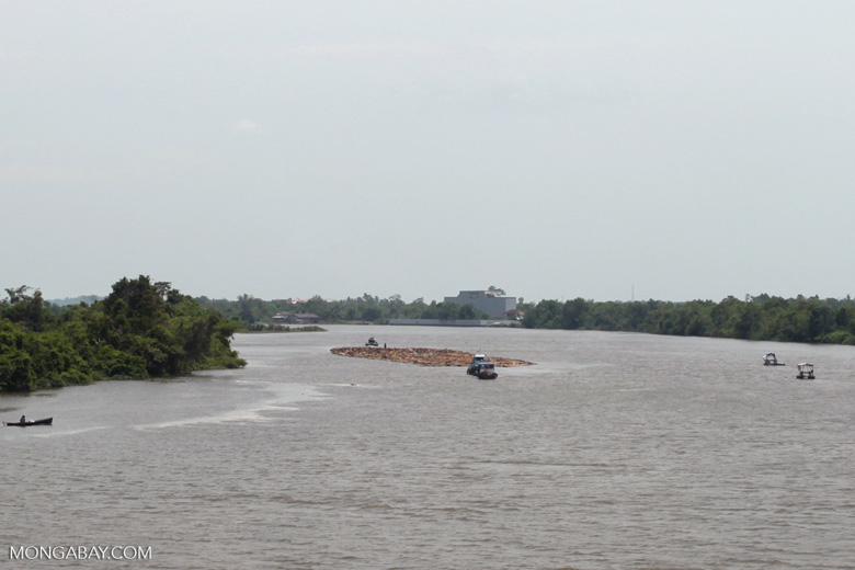 Rainforest logs being flotated downriver [kalbar_2313]