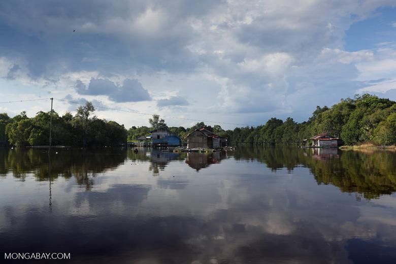 Ekosistem alam yang sudah tertata rapi harus dijaga, jangan dirusak akibat keserakahan manusia. Foto: Rhett Butler