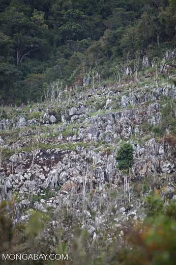Limestone rock formations in New Guinea