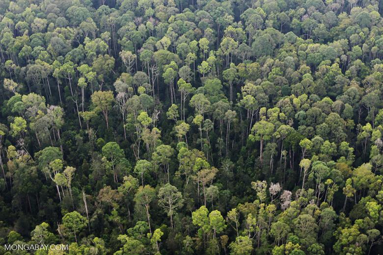 Peat forest in Giam Siak Kecil [riau_0765]