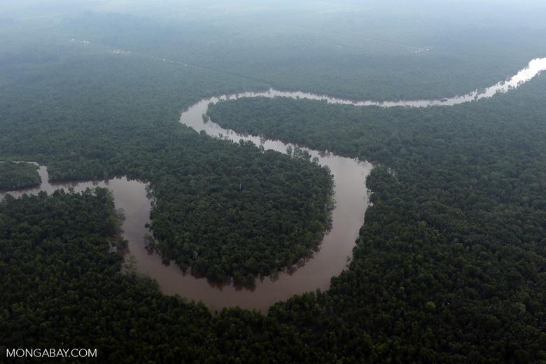 River in the Riau peatlands