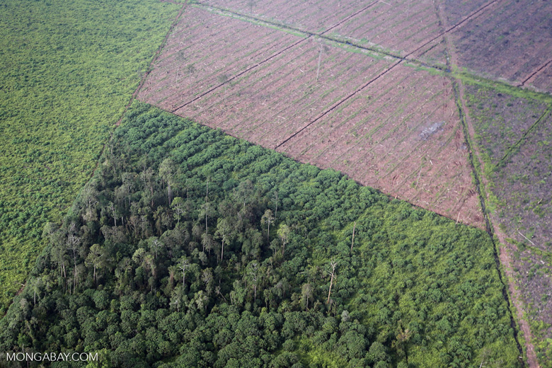 Peatlands destruction in Riau [riau_1075]