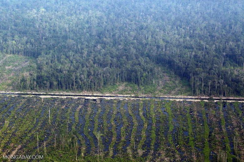 Peatlands destruction in Riau [riau_5347]