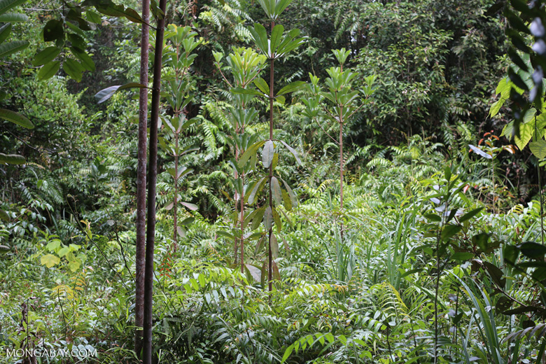 tropical rainforest research paper The tropical rain forest is classified as af meaning tropical forest the a is given to tropical climates that are how to write a research paper research, writing.
