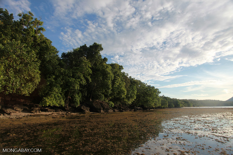 Mangroves and seagrass on Bunaken Island
