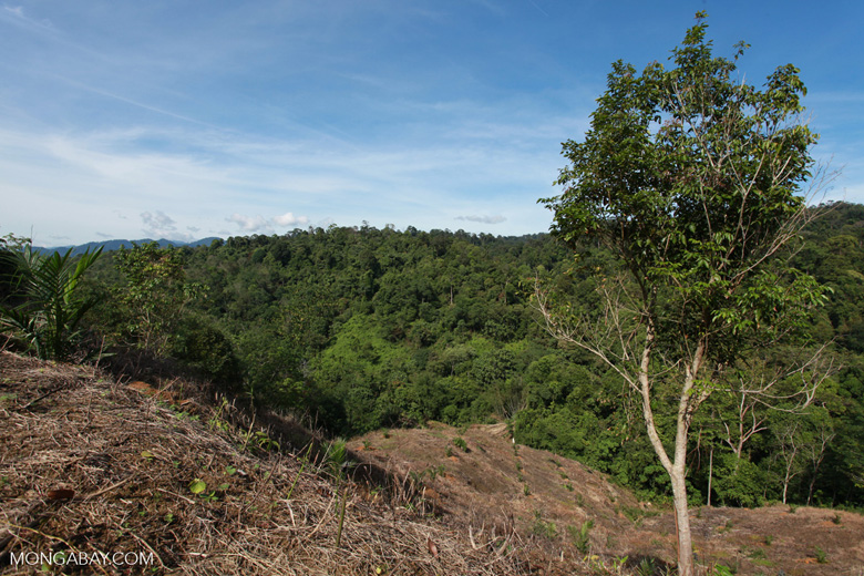 New forest clearing for oil palm near the boundary of Gunung Leuser National Park