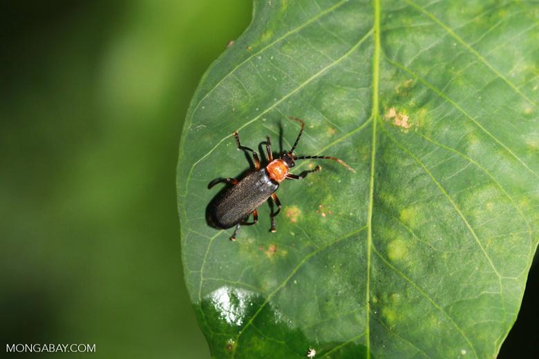 black and orange insect. Black Bedroom Furniture Sets. Home Design Ideas